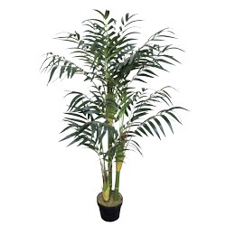 Bamboo plant Groen